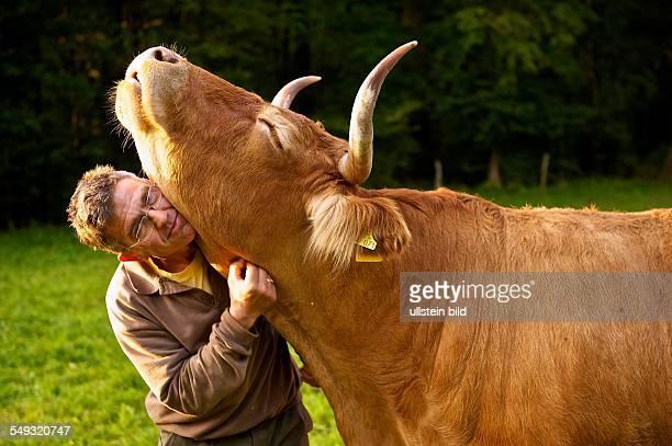 Der Landwirt mit seinem Lieblingsrind in der Abendsonne auf der Weide