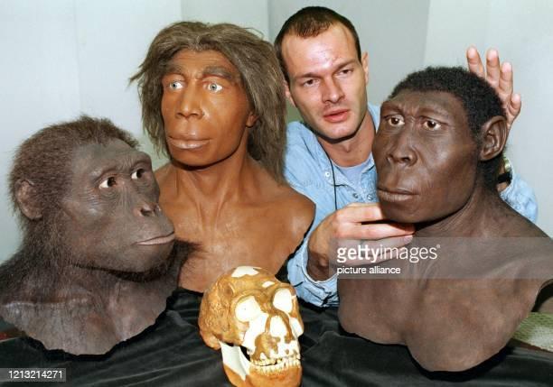 Der Palaeontologe Oliver Sandrock zeigt am 16.9.1998 im Hessischen Landesmuseum die Köpfe von drei Urmenschen, Australopithecus Afarensis , Homo...