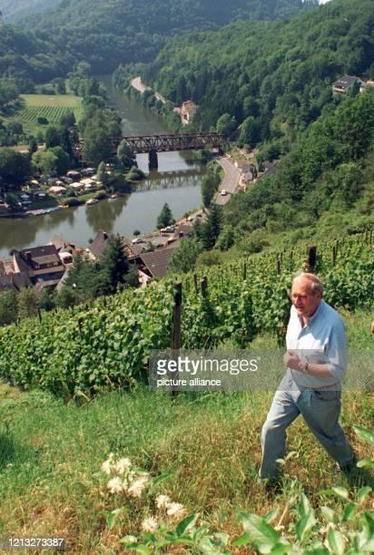Der rheinland-pfälzische Wirtschafts- und Verkehrsminister Rainer Brüder wandert am 9.8.1997 durch die Weinberge in Oberwies . Der Minister und...