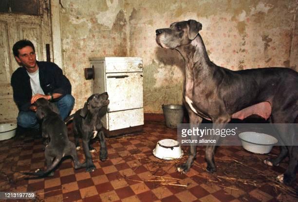 """Der Tierschützer Axel Brakebusch versucht am 2.8.1999 in einem als """"Wurf-Zimmer"""" genutzten Zimmer auf dem Hof eines Hundezucht-Betriebes in der..."""