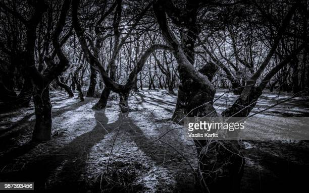 der wald des dr. caligari - wald stock pictures, royalty-free photos & images