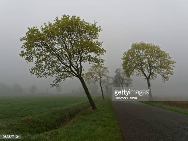der weg in den nebel - weg fotografías e imágenes de stock