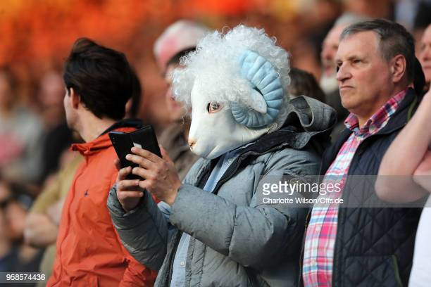 Derby fan wearing a ram mask sends a text from his phone during the Sky Bet Championship Play Off Semi FinalSecond Leg match between Fulham and Derby...