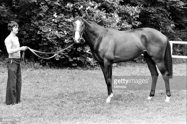 Derby winning racehorse Shergar at stables. 6th June 1981.