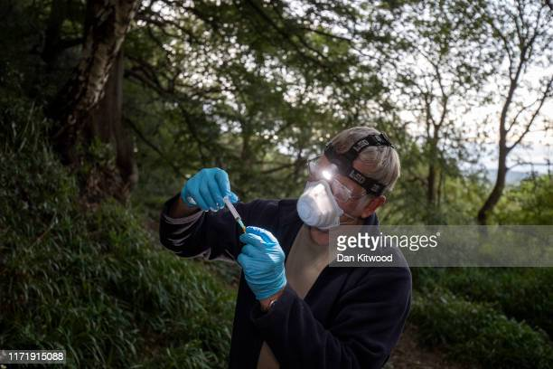 Derbyshire Badger Vaccination team volunteer Fred Dyson makes up vaccines on September 03 2019 in the Peak District England The 'Derbyshire Badger...