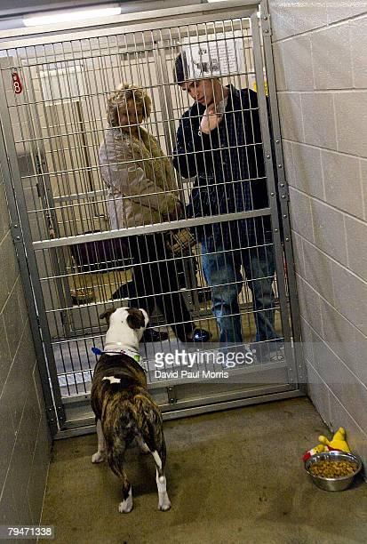 Derek Couvdos and his mother Rosemary Couvdos, both of Sacramento, look at Akuti, a 1-year-old American Staffordshire Terrier, at the Sacramento SPCA...