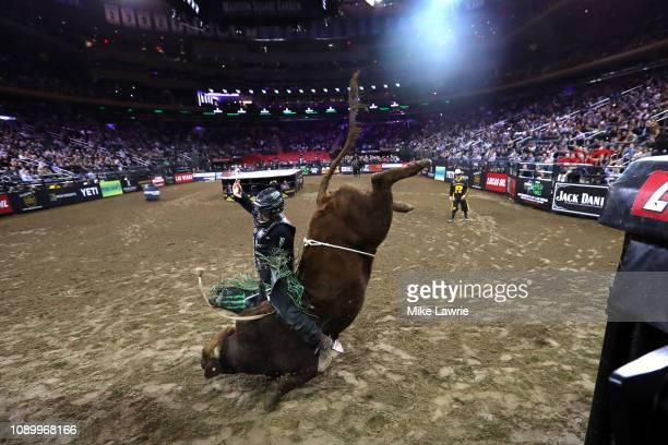 Derek Kolbaba rides Bezerk during the PBR Unleash The Beast bull riding event at Madison Square Garden on January 04 2019 in New York City