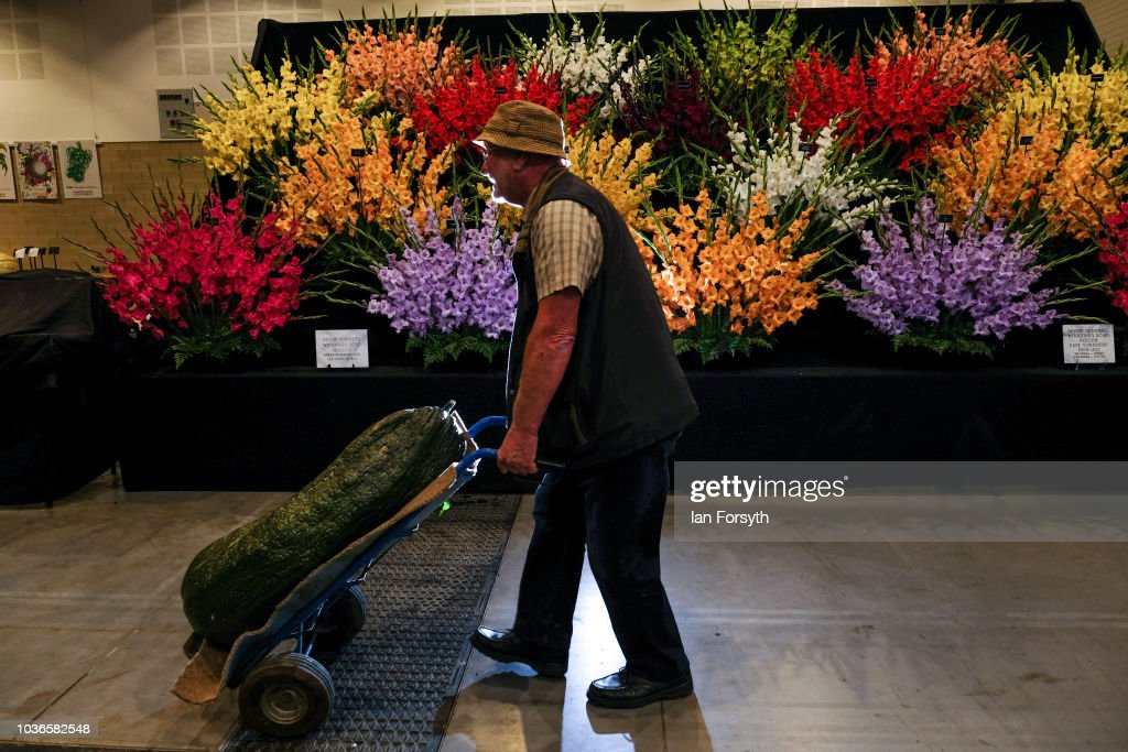 Derek Taylor from Barnsley wheels in his giant marrow as he prepares for the giant vegetable competition on the first day of the Harrogate Autumn Flower Show held at the Great Yorkshire Showground on September 14, 2018 in Harrogate, England. Gardeners and horticulturalists from across Britain descend on the Yorkshire Showground every Autumn to show off their prized crops of vegetables, flowers and plants in the hope of a coveted award from the judges. The show which is organised by the North of England Horticultural Society is open to the public from 14-16 September.