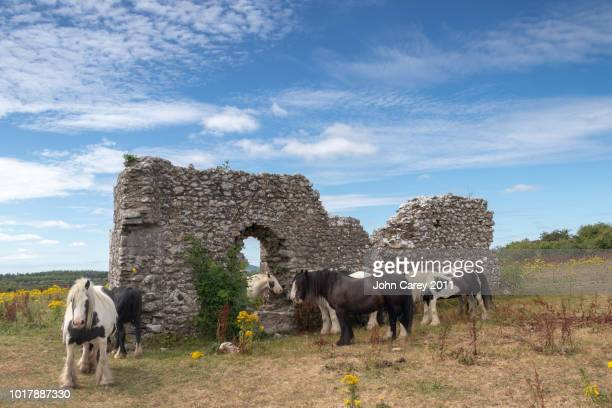 derrynaflan church with a beautiful blue sky & horses the surrounding field, derrynaflan, thurles, co tipperary, ireland - old ruin stock pictures, royalty-free photos & images