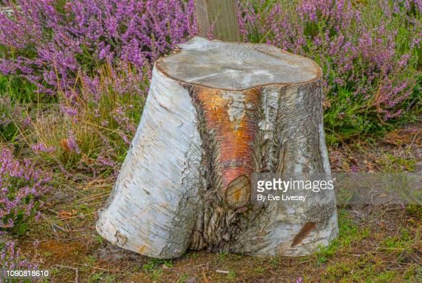 dersingham nature reserve - piemel stockfoto's en -beelden