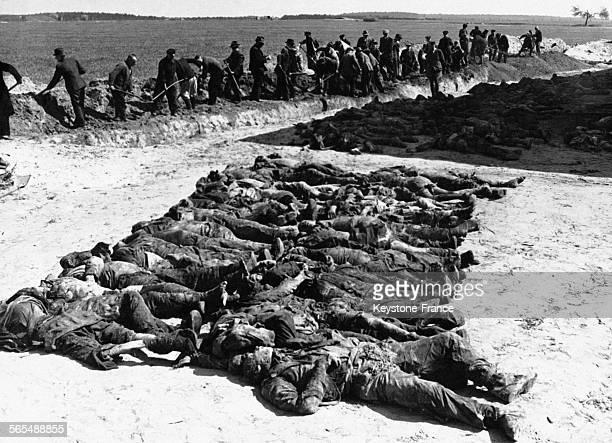 Des civils allemands exhumant d'un charnier environ 700 corps victimes des Nazis en 1945 dans la région de Gardelegen en Allemagne