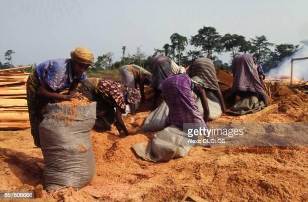 Des femmes ramassent de la sciure de bois, le 10 avril 1994, Abengourou, Côte d'Ivoire.