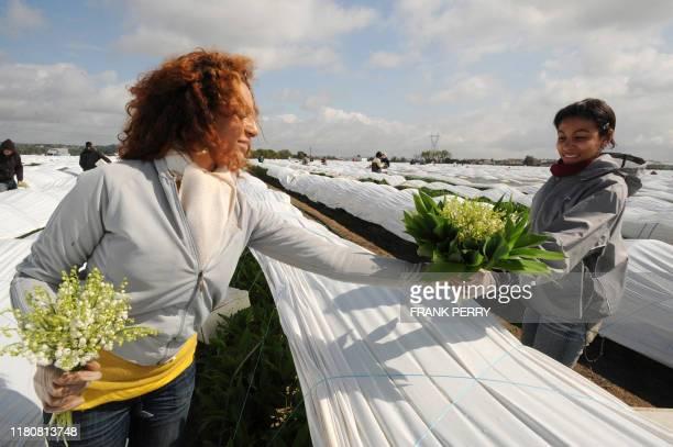 Des femmes récoltent du muguet dans l'exploitation maraîchère de Louis Douineau, le 24 Avril 2008 à Saint-Julien de Concelles. Le muguet nantais, qui...