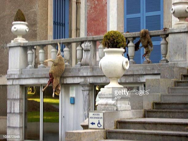 Des éleveurs ont déposés des carcasses de brebis, vraisemblablement tuées par un ours, devant la mairie de Bagnères-de-Bigorre, le 01 juin 2006. Dans...