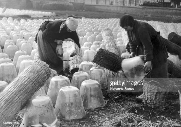 Des maraîchères de la banlieue parisienne remplacent les paillages de l'hiver par des cloches en verre en France en 1934
