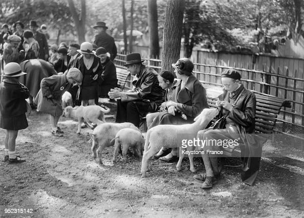 Des Parisiens Donnent A Manger Aux Brebis Au Zoo Du Jardin News