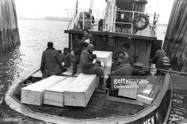 Des prisonniers volontaires procédent au transfert des cercueils dans des fosses communes de défunts indigents et de corps non réclamés sur l'ile de...
