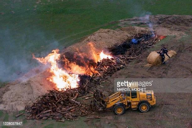 Des sapeurs-pompiers procèdent à l'incinération de quelque 450 brebis, le 06 mars 2001 à La Baroche-Gondouin, où des analyses sérologiques concernant...