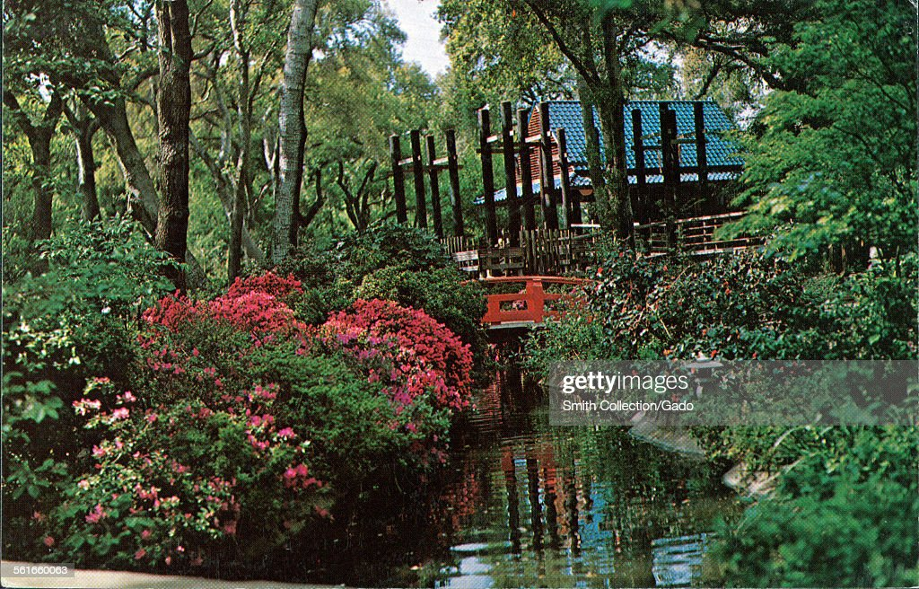 حدائق ديسكانسو Descanso-gardens-la-canada-california-japanese-tea-garden-1945-picture-id561660063