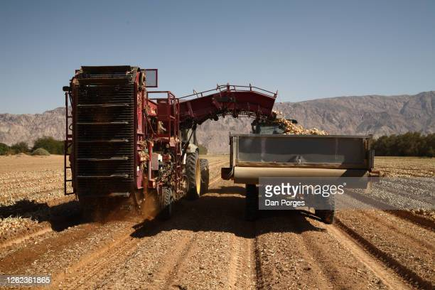 desert agriculture and machinery - jordanian workforce stock pictures, royalty-free photos & images
