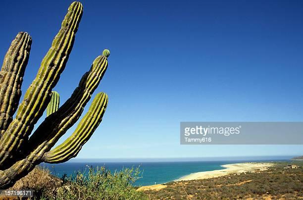 砂漠にビーチ