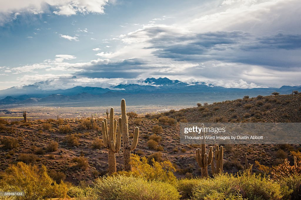Desert Beauty : Stock Photo