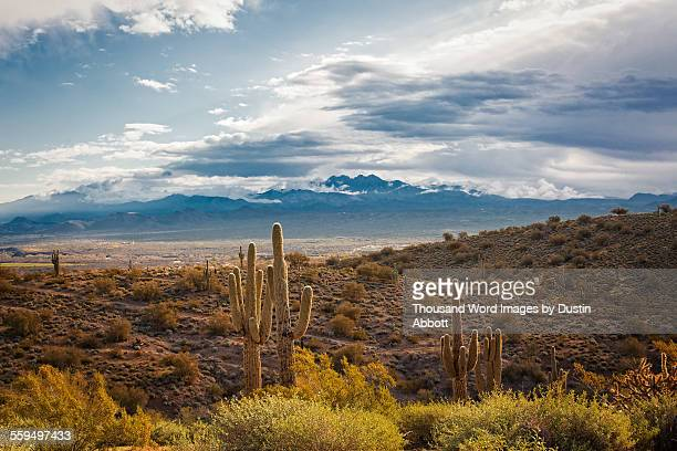 desert beauty - dustin abbott stock pictures, royalty-free photos & images