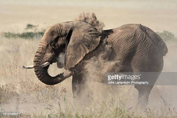 desert elephant, twyfelfontein, namibia may 2008 - desert elephant stock pictures, royalty-free photos & images