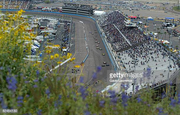 Desert flowers bloom during the IRL Indycar Series XM Satellite Radio Indy 200 on March 19 2005 at the Phoenix International Raceway in Phoenix...