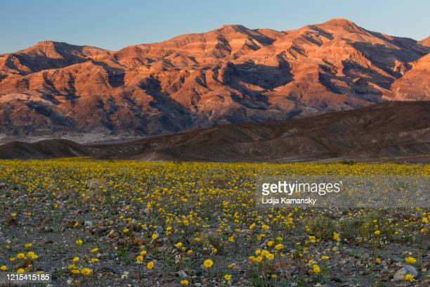 desert gold sunset - 2016 stock pictures, royalty-free photos & images