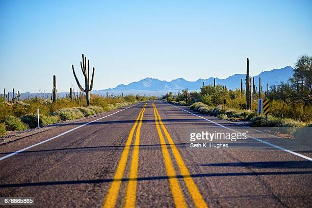 Desert highway, Organ Pipe Cactus National Monument, Arizona, USA