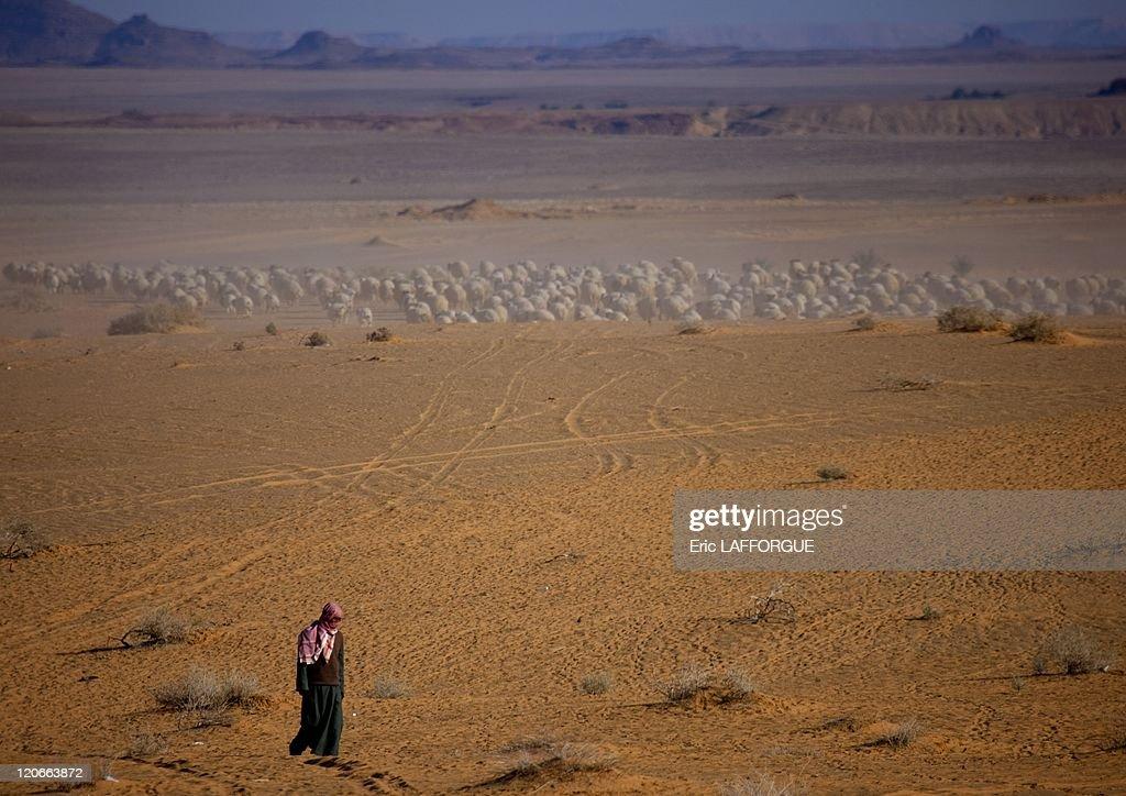 Desert In Jeddah, Saudi Arabia On January 18, 2010 - : News Photo