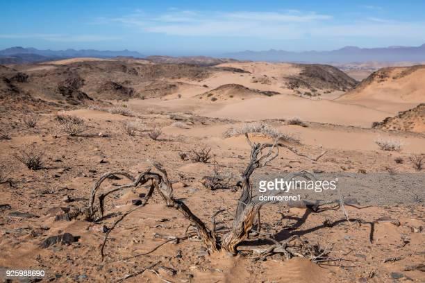 Desert landscape, Damaraland, Namibia
