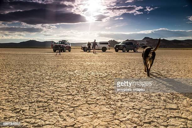 Le film brosse un paysage de désert et de chien