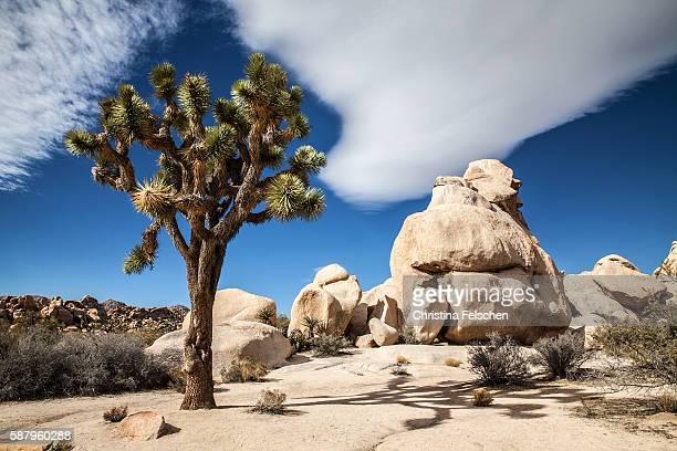 Desert landscape in Joshua Tree National Park, California