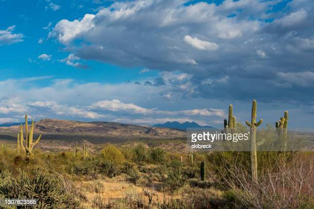 desert landscape in the tonto national forest - national forest stock pictures, royalty-free photos & images