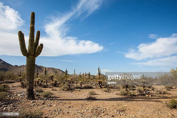 desert landscape - sonoran desert stock pictures, royalty-free photos & images