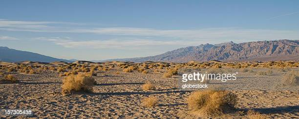 desert landscape - tumbleweed stock photos and pictures