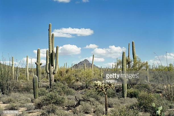 desert landscape - sonora mexico stock photos and pictures