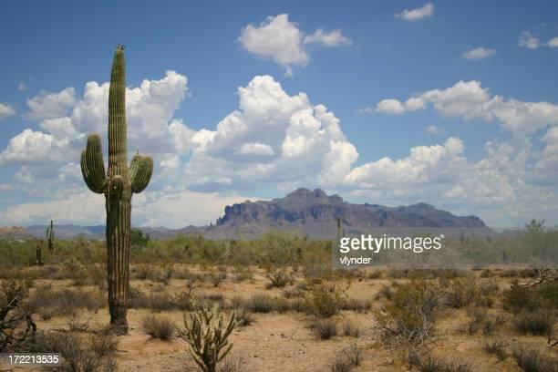 砂漠の景観