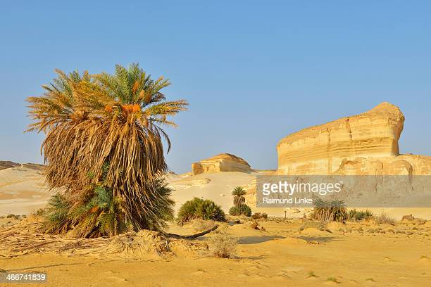 desert landscape - arid stock pictures, royalty-free photos & images