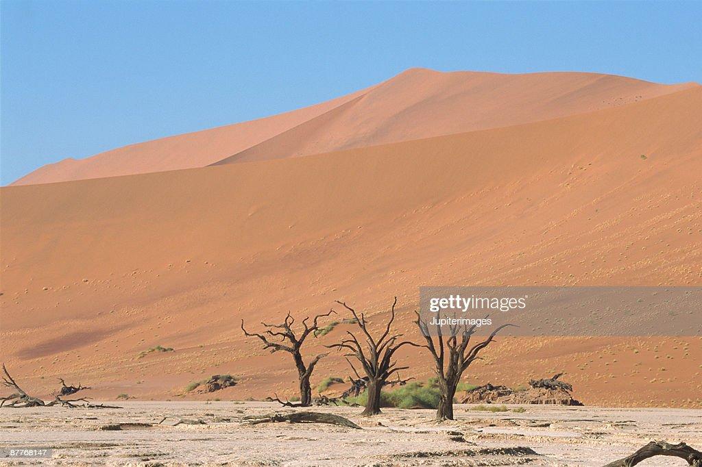Desert landscape : Stock Photo