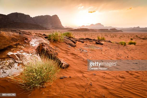 a desert landscape. - arbusto stock pictures, royalty-free photos & images