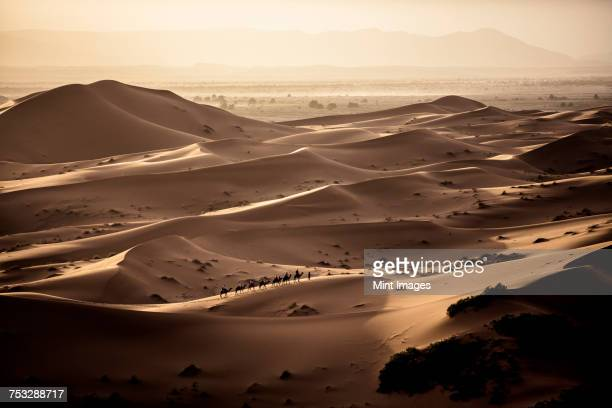 desert landscape with caravan walking across sand dunes, a plain in the distance. - heat haze stock pictures, royalty-free photos & images