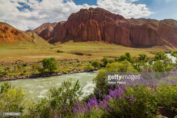 desert landscape with flowering lavender bushes - john day fossil beds national park stock pictures, royalty-free photos & images