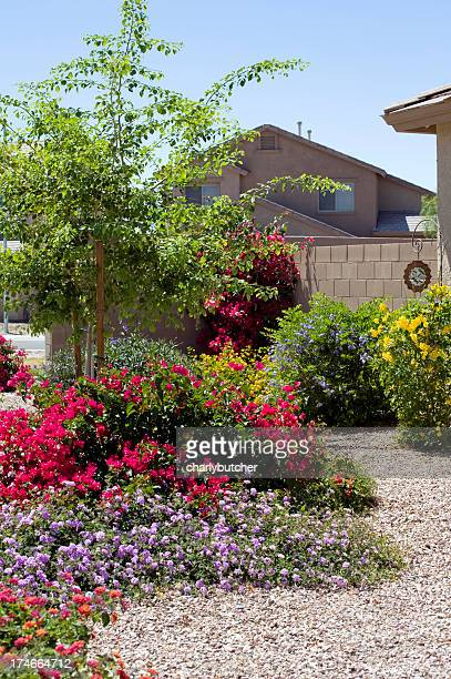 desert landscaping - lantana stock pictures, royalty-free photos & images