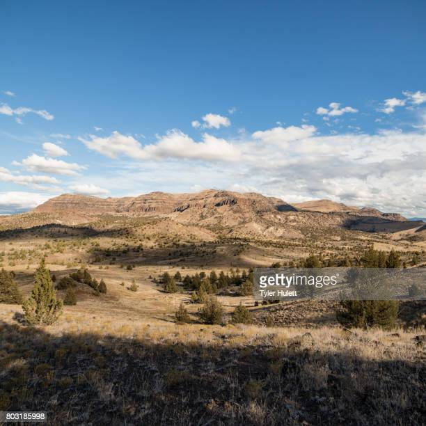 desert mountain (sutton mountain) and blue open skies - western juniper tree stock pictures, royalty-free photos & images