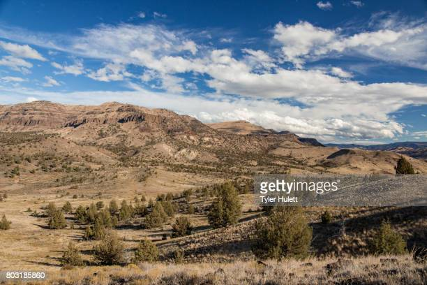 desert mountain and blue skies - western juniper tree stock pictures, royalty-free photos & images