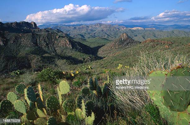 Desert mountains, prickly cactus in foreground.