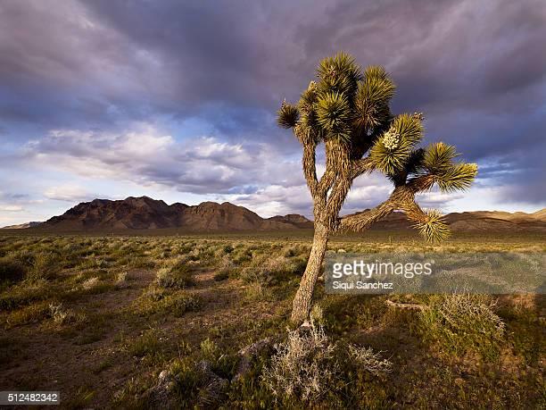Desert, Nevada